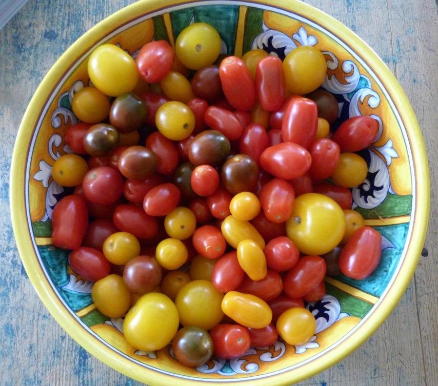 Garden tomatoes. Ready to roast.